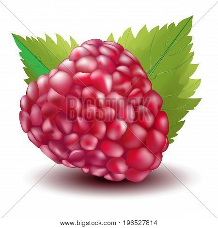 Beautiful vector illustration. Bright juicy berry raspberry with leaves
