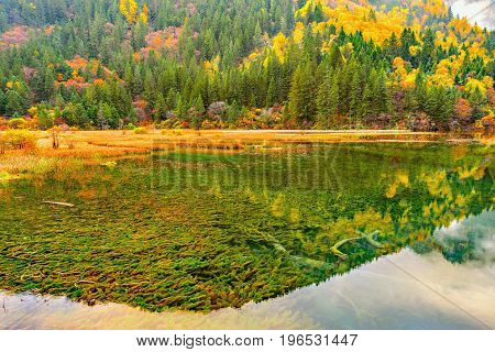 Autumn view of the lake with pure water at early morning time. Jiuzhaigou nature reserve Jiuzhai Valley National Park China.