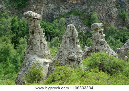 Miracle Stone Mushrooms Montage, Panorama of the big size. Altai, Russia