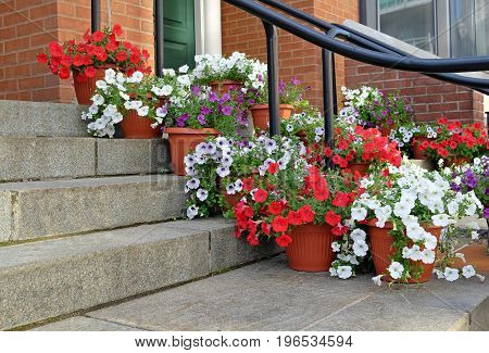 Colorful flowers in pots on a doorstep