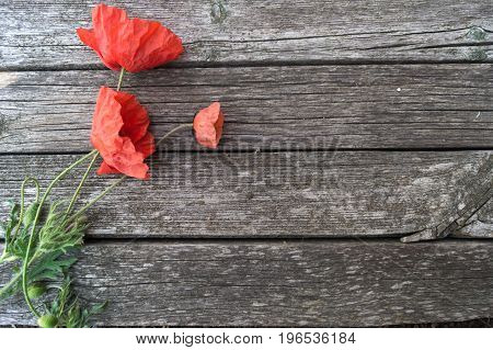 Bouquet of poppies on the grey wooden background