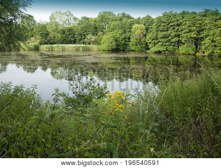 Lake Scene With Growth Trees And Reflections In Water