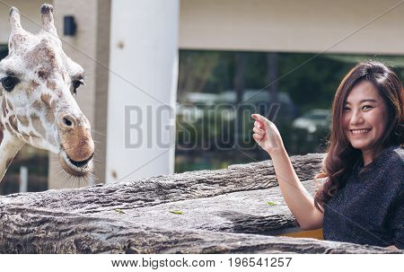 A happy beautiful Asian woman standing next to giraffe in the zoo after feed them grasses