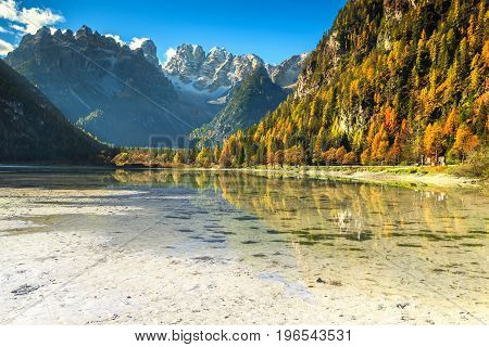 Majestic autumn landscape alpine glacier lake and yellow pine trees Landro (Durrensee) lake with famous Cristallo mountain group in background Dolomites Italy Europe