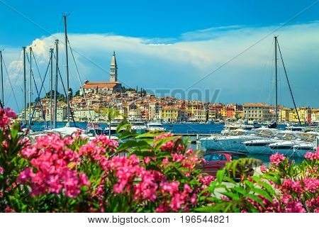 Amazing romantic old town of Rovinj with beautiful pink oleander flowers Istrian peninsula Croatia Europe