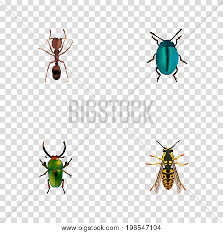 Realistic Bee, Bug, Emmet And Other Vector Elements