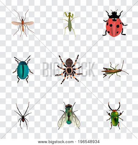 Realistic Tarantula, Locust, Ladybird And Other Vector Elements