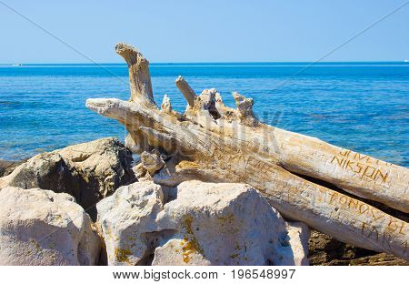 A dry tree trunk on the shore of the Adriatic Sea in Croatia.