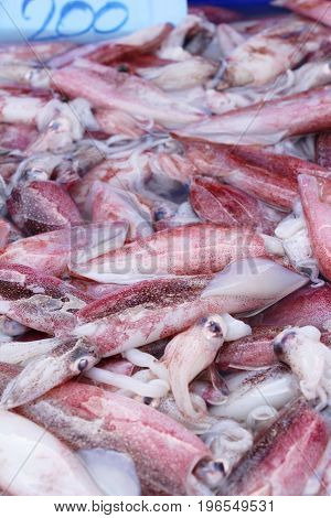 Fresh squid for cooking in the market
