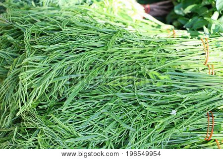 Acacia pennata for cooking in the market