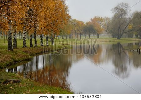 Rainy landscape in autumn birch trees and reflection in water