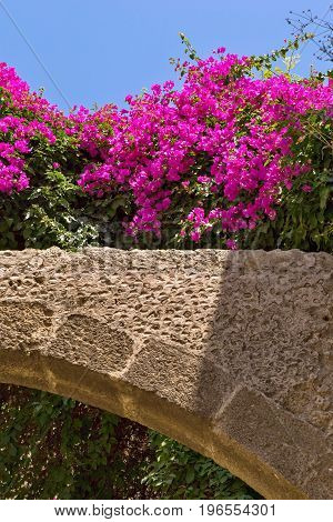 bright crimson flowers over an ancient stone arch