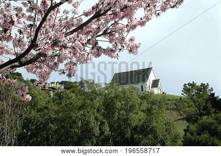 Quiet scene of little church on hill with pink plum blossoms in foreground.