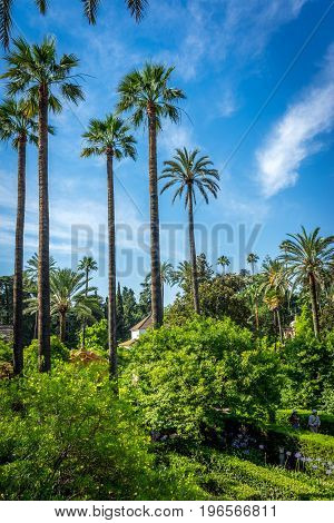 Palm Trees With A Blue Sky In Seville, Spain, Europe