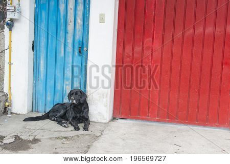 stray dog of black color resting next to a door colour blue