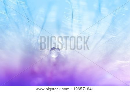 A bird with delicate colors with a drop of water or dew. Delicate and airy image. Art work with soft focus