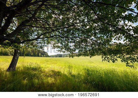 Summer background concept landscape field sun rays through the tree crown blue sky white clouds