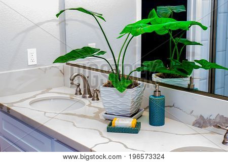 Plants & Lotion Reflection In Mirror Of Modern Bathroom