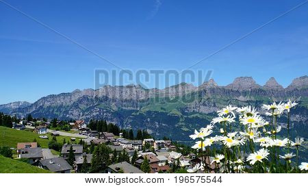 View to the mountain chain of the Churfirsten in the canton of St. Gallen in Switzerland, in the foreground white Margarites
