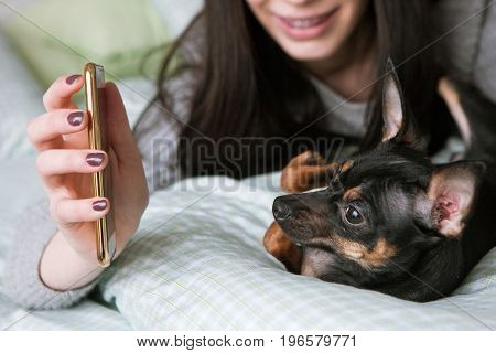 Strong friendship with small dog. Toy Terrier and unrecognizable woman, girl show to puppy picture on her mobile phone. Modern social media background