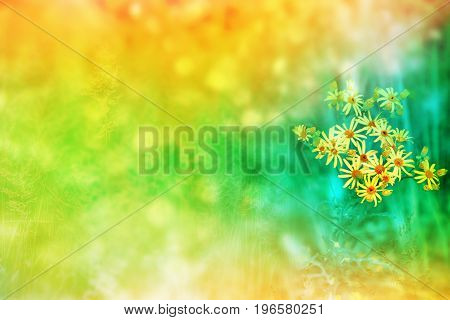 Bright yellow flower. Blurred image of grass.