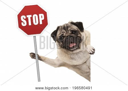 smiling pug puppy dog holding up red traffic stop sign isolated on white background