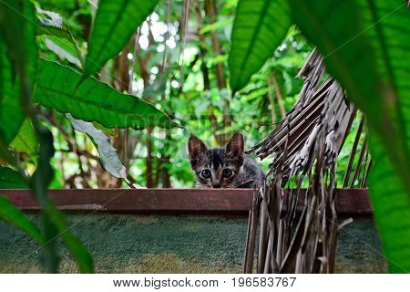 Little curious and frightened gray kitten on a fence among the greenery