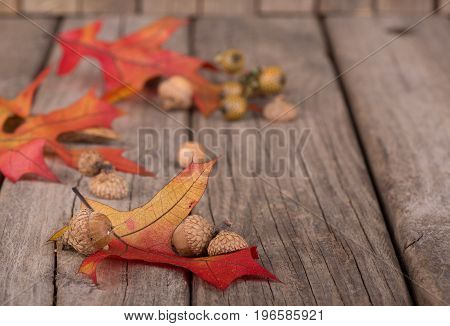 Autumn oak leaves and acorns on a rustic wood surface
