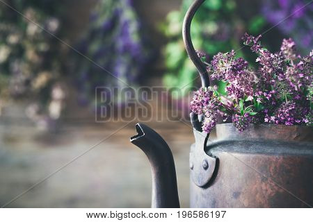 Vintage Rustic Tea Kettle Full Of Thyme Flowers For Healthy Herbal Tea. Hanging Medicinal Plants On