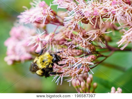 Close-up image of a bee feeding on flowers