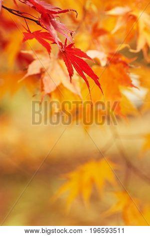 Autumn park  leaf background