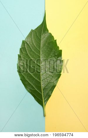 Green leaf on blue and yellow background