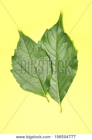 Green leaf on yellow background