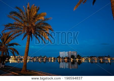 Palm trees near the lake at night