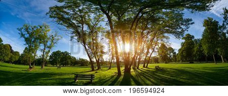Sunlight through the trunks of trees. Morning in the summer park