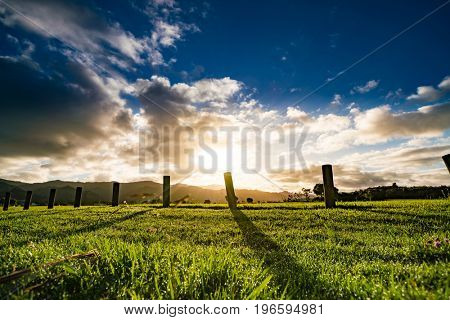 Sunrise on green farm field in New Zealand