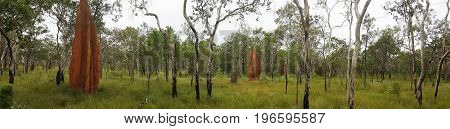outback Australia with huge Cathedral termite mounds