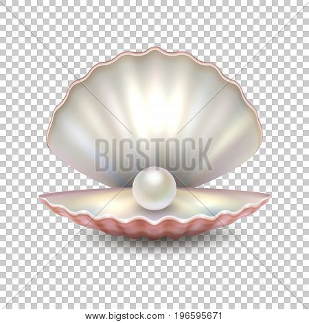 Realistic vector beautiful natural open sea pearl shell closeup isolated on transparent background. Design template, clipart, icon or mockup, EPS10 illustration.