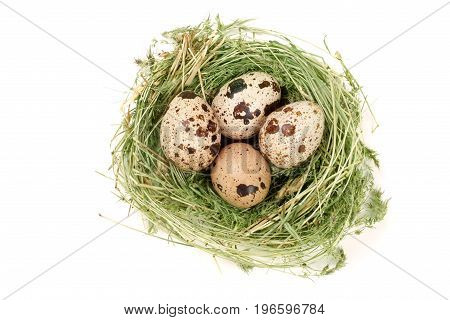 four quail eggs in a nest isolated on white background. Top view.