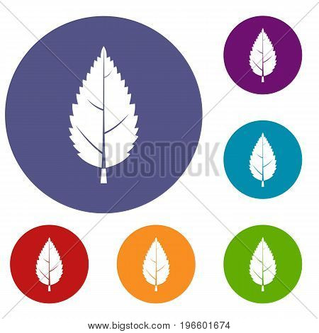 Hornbeam leaf icons set in flat circle red, blue and green color for web