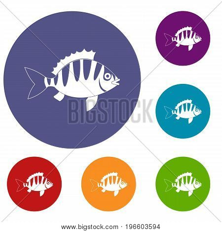 Perch icons set in flat circle red, blue and green color for web