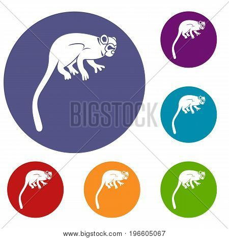 Marmoset monkey icons set in flat circle red, blue and green color for web