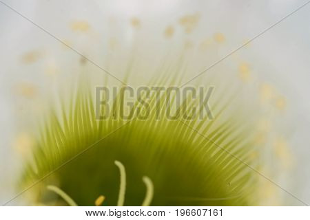 Abstract close-up of a flower. Shallow depth of field.