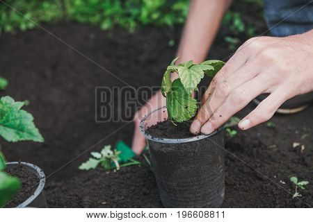 To Plant A Tree. The Person Plants A Tree.