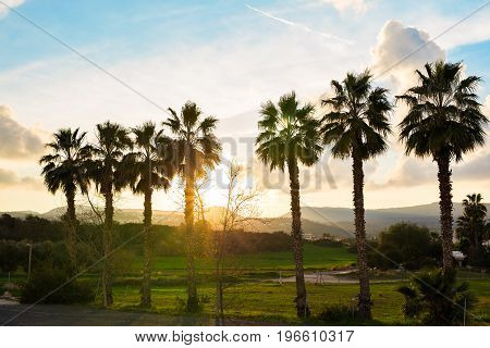 silhouettes of palm trees row on sunset