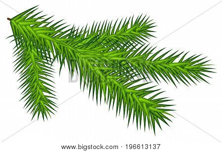 Green juicy spruce branch. Isolated on white vector illustration