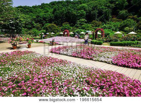 Ashikaga Flower Park In Tochigi, Japan