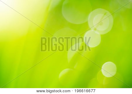 background light soft bokeh, glitter sweet nature greenery color filter abstract for background.