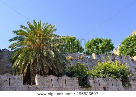 fragment of ancient stone fortress with trees and a palm tree on a wall in the old city of Rhodes