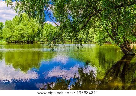Trees in flooded forests on river Danube near city Bratislava Slovakia